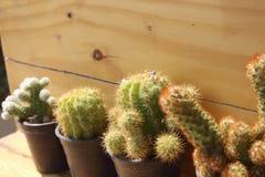 Kaktus w garnku na drewnianym tle Obraz Stock