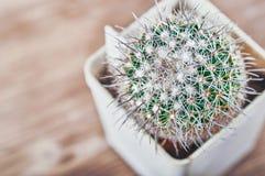 Kaktus w garnku na zamazanym drewnianym tle, odgórny widok Zielony kaktus z popielatymi długimi igłami Zakończenie, kopii przestr obraz stock