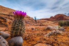 Kaktus w jarze Obrazy Royalty Free