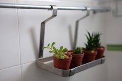 kaktus w kąpielowym pokoju Zdjęcia Stock