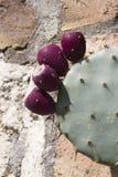 Kaktus w kwiacie Fotografia Royalty Free
