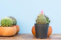 Kaktus w kwiatu garnku na drewno stole Fotografia Royalty Free