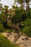 Kaktus w Loro Parque Fotografia Stock