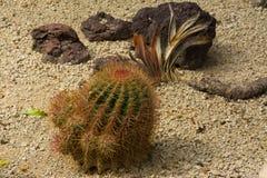 Kaktus w Loro Parque Zdjęcia Royalty Free