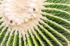 Kaktus w ogródzie Zdjęcia Stock