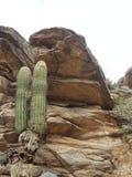 Kaktus w Południowej górze Obraz Stock