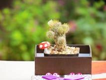 Kaktus w prezenta pudełku na stole Obrazy Royalty Free