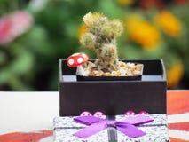 Kaktus w prezenta pudełku na stole Fotografia Royalty Free