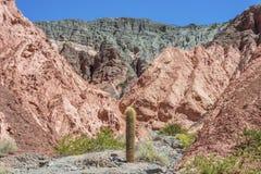 Kaktus w Purmamarca, Jujuy, Argentyna. Obrazy Stock