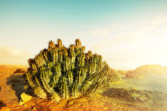 Kaktus w pustyni Fotografia Royalty Free