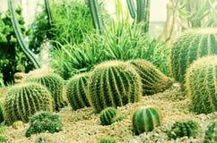 Kaktus w pustyni obrazy royalty free
