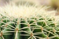 Kaktus w pustyni zdjęcie royalty free