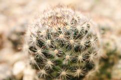 Kaktus w pustyni zdjęcia royalty free