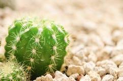 Kaktus w pustyni fotografia stock