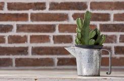 Kaktus w rocznika cynku miotaczach Zdjęcia Royalty Free