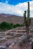 Kaktus w ruinach, Jujuy, Argentyna zdjęcie royalty free