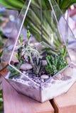 Kaktus w szklanych garnkach Sceneria kamień i kwiaty Obraz Stock