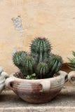 Kaktus w terakotowym słoju Fotografia Royalty Free