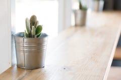 Kaktus w wazowym wystroju Fotografia Royalty Free