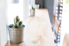 Kaktus w wazowym wystroju Obrazy Royalty Free