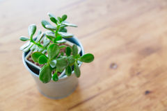 Kaktus w wazowym wystroju Obraz Royalty Free