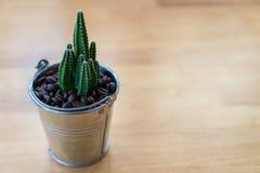 Kaktus w wazowym wystroju na drewnianym stole (Filtrujący wizerunków procesy Obrazy Stock