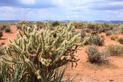 Kaktus w zlanych western statuach Obrazy Stock