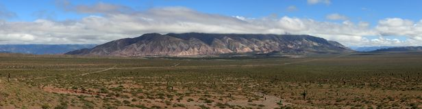 Kaktus-Wald Lizenzfreie Stockfotografie