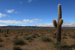 Kaktus-Wald Stockbild
