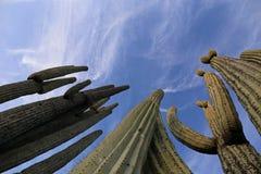Kaktus-Wald in Frogview Lizenzfreie Stockfotografie