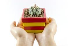Kaktus-Weiß-Hintergrund stockfotos