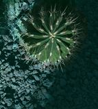 Kaktus z białymi kręgosłupami fotografia royalty free