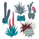 Kaktus z kwiatem Vera i aloesem Zdjęcia Royalty Free