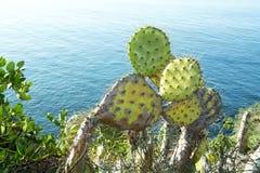 Kaktus z owocowym brązem Fotografia Royalty Free