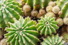 Kaktus, zakończenie up obrazy royalty free