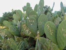 Kaktus zasadza pokazywać szkodę od wandalizmu i graffiti dokąd ludzie rzeźbili inicjały i symbole na ich powierzchni obrazy stock