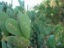 Kaktus zasadza pokazywa? szkod? od wandalizmu i graffiti dok?d ludzie rze?bili inicja?y i symbole na ich powierzchni fotografia stock