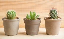 3 kaktusa Zdjęcia Stock