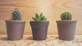 3 kaktusa Fotografia Stock