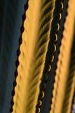 Kaktusa deseniowy zakończenie Zdjęcie Stock