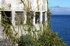 Kaktusa dom zdjęcie stock