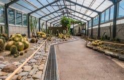 Kaktusa dom w Yama Jigoku Obraz Stock
