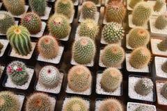 Kaktusa gospodarstwo rolne Fotografia Royalty Free