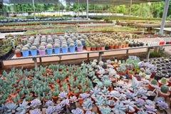 Kaktusa gospodarstwo rolne Obraz Stock