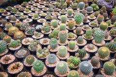 Kaktusa gospodarstwo rolne Obraz Royalty Free