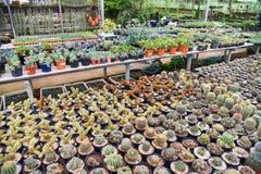 Kaktusa gospodarstwo rolne Obrazy Stock