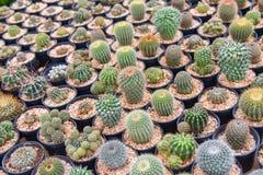 Kaktusa gospodarstwo rolne Obrazy Royalty Free