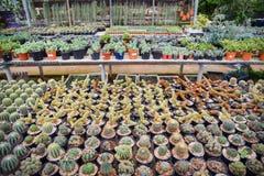 Kaktusa gospodarstwo rolne Zdjęcia Royalty Free