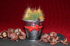Kaktusa i jałowa rożki Obraz Stock