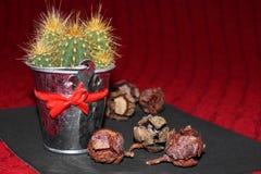 Kaktusa i jałowa rożki Obrazy Stock